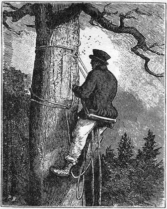 bartnik, bartnictwo, Zygmunt Gloger, 1900-1903, Puszcza Białowieska, Białowieski Park Narodowy, Białowieża