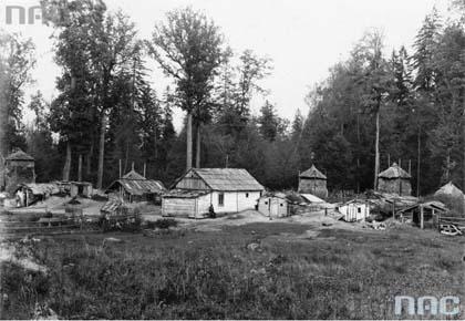 Budy, ziemianki, wyręb, wycinka drzew, eksploatacja, Puszcza Białowieska, okres międzywojenny, dwudziestolecie międzywojenne