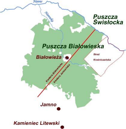 Straż Kraśniczańska, Kwatera Jamneńska, leśnictwo jemneńskie, Jamno, Puszcza Białowieska, Białowieski Park Narodowy, Białowieża, mapa