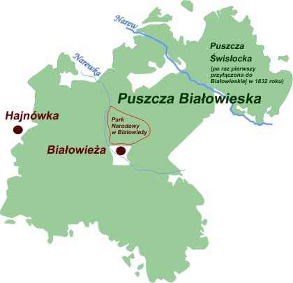 Puszcza Białowieska, Park Narodowy w Białowieży, Białowieża, Puszcza Świsłocka