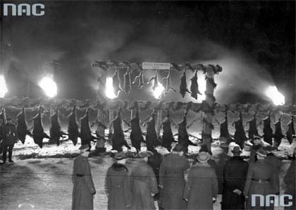polowanie reprezentacyjne, łowy, Białowieża, Puszcza Białowieska, okres międzywojenny, dwudziestolecie międzywojenne