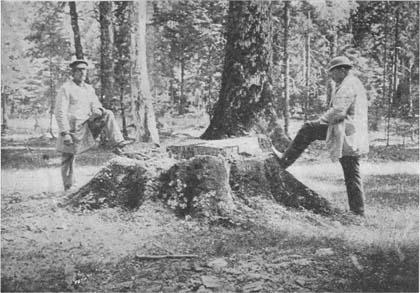 Henryk Sienkiewicz, Zygmunt Gloger, 1882, 1903, Puszcza Białowieska, Białowieski Park Narodowy, Białowieża w albumie