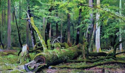 Iwan Iwanowicz Szyszkin, Wycięty dąb, Иван Иванович Шышкин, Срубленный дуб, 1892, Puszcza Białowieska, Białowieski Park Narodowy, Białowieża